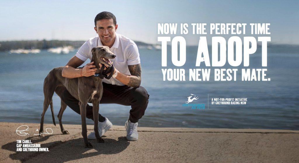 Greyhound Adoption Shoalhaven Greyhound Racing Club